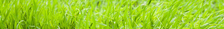 beautiful green lawn grass